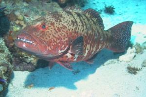 20020602_2_Panorama_Reef_0004