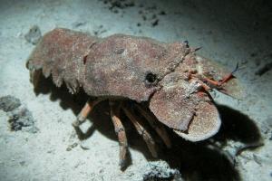 Gliederfüßer (Arthropoda)