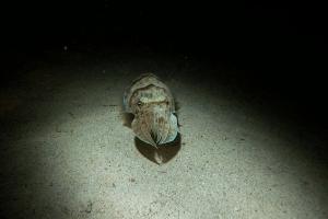 20010620_Mangrove_Bay_Nacht_0020