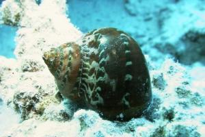 Weichtiere (Mollusca)
